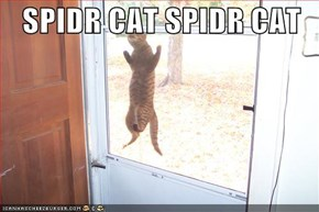 SPIDR CAT SPIDR CAT