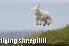 flying sheep!!!!!