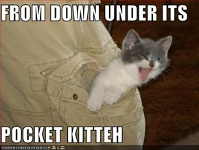 FROM DOWN UNDER ITS  POCKET KITTEH