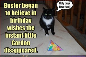 it's kitteh's birthday