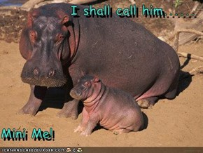I shall call him......  Mini Me!