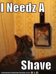 I Needz A   Shave