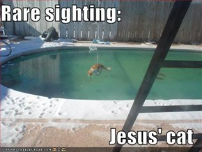 Rare sighting:  Jesus' cat