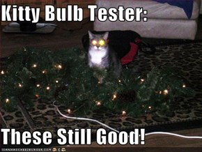 Kitty Bulb Tester:  These Still Good!