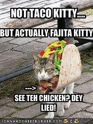 NOT TACO KITTY....