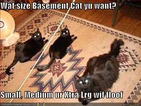 Wat size Basement Cat yu want?  Small, Medium ur Xtra Lrg wif floof
