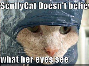 ScullyCat Doesn't believe  what her eyes see