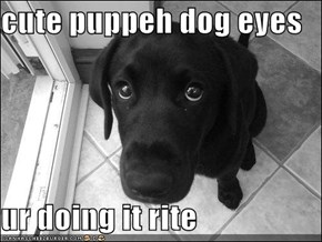 cute puppeh dog eyes  ur doing it rite