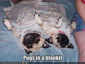 Pugs in a blankit
