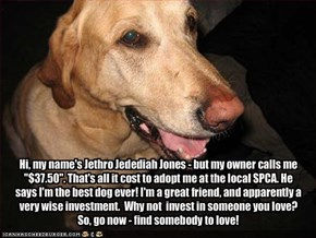 "Hi, my name's Jethro Jedediah Jones - but my owner calls me ""$37.50"". That's all it cost to adopt me at the local SPCA. He says I'm the best dog ever! I'm a great friend, and apparently a very wise investment.  Why not  invest in someone you love? So, go"