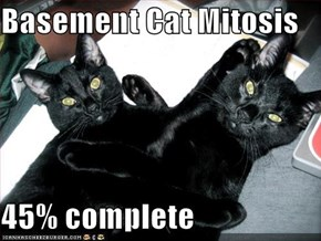 Basement Cat Mitosis  45% complete