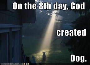 On the 8th day, God created Dog.