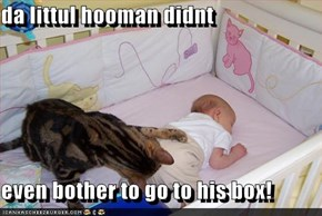 da littul hooman didnt  even bother to go to his box!