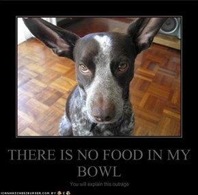 THERE IS NO FOOD IN MY BOWL