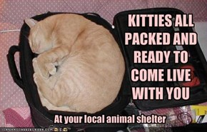 KITTIES ALL PACKED AND READY TO COME LIVE WITH YOU
