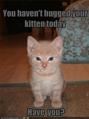 You haven't hugged your kitten today