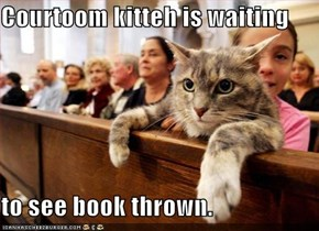 Courtoom kitteh is waiting  to see book thrown.