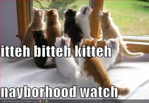 itteh bitteh kitteh nayborhood watch