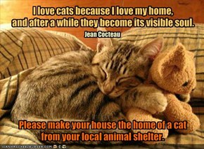 I love cats because I love my home,