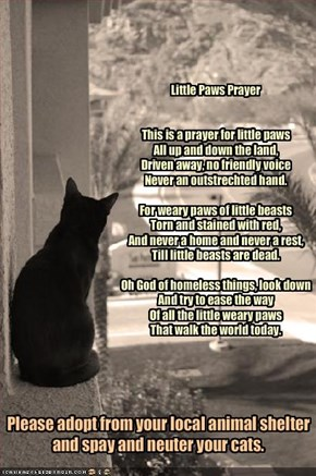 Little Paws Prayer