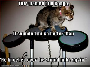 """They named him Bongo. It sounded much better than """"He knocked over the stupid mike again."""""""