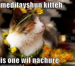 meditayshun kitteh  is one wif nachure