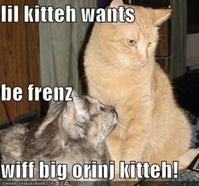 lil kitteh wants be frenz wiff big orinj kitteh!
