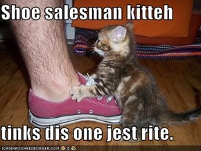 Shoe salesman kitteh  tinks dis one jest rite.