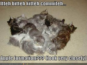 Itteh bitteh kitteh commiteh...  Apple formation??? (look very closely)