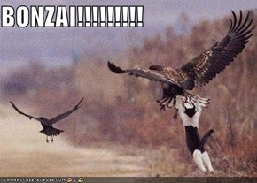 BONZAI!!!!!!!!!