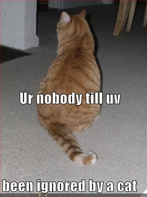 Ur nobody till uv  been ignored by a cat