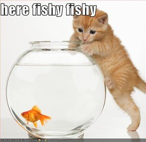 here fishy fishy