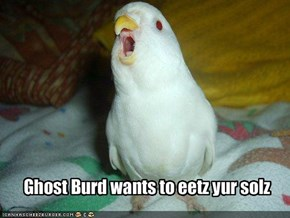 Ghost Burd wants to eetz yur solz