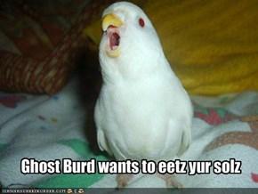 Ghost Burd wants to eetz yur solz