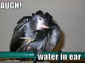 AUGH!  water in ear
