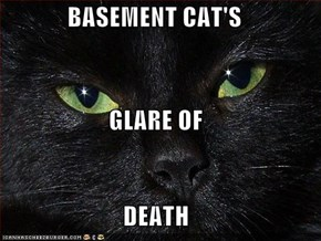 BASEMENT CAT'S GLARE OF DEATH