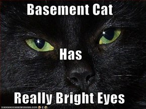 Basement Cat Has Really Bright Eyes