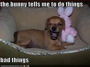 the bunny tells me to do things  bad things