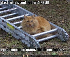 black kittehz and ladderz? PHEH!  u nevr knod bout ORUNG kitteh and ladderz...