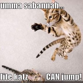 umma sabannah...  lite katz           CAN jump!