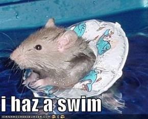 i haz a swim