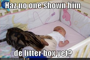 Haz no one shown him  de litter box yet?