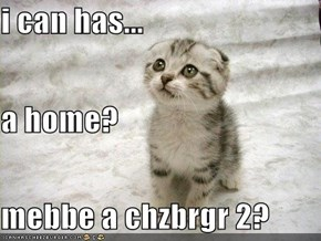 i can has... a home? mebbe a chzbrgr 2?