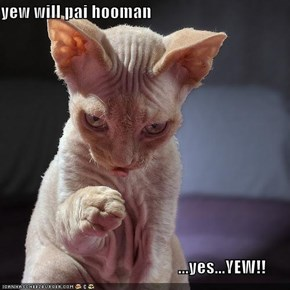 yew will pai hooman                                                      ...yes...YEW!!