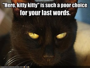 """""""Here, kitty kitty"""" is such a poor choice"""