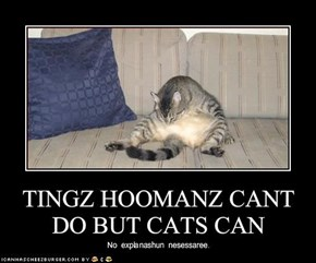 TINGZ HOOMANZ CANT DO BUT CATS CAN