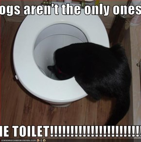 Dogs aren't the only ones  THAT GET TO DRINK FROM THE TOILET!!!!!!!!!!!!!!!!!!!!!!!!!!!!!!!!!!!!!!!!!!!!!!!!!!!!!!!!!