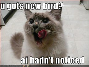 u gots new bird?  ai hadn't noticed