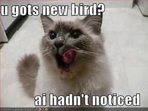 u gots new bird?  ai hadn't noticed