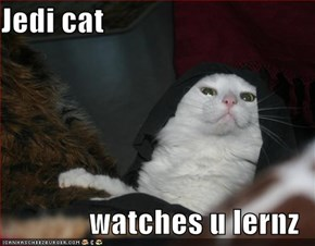 Jedi cat  watches u lernz
